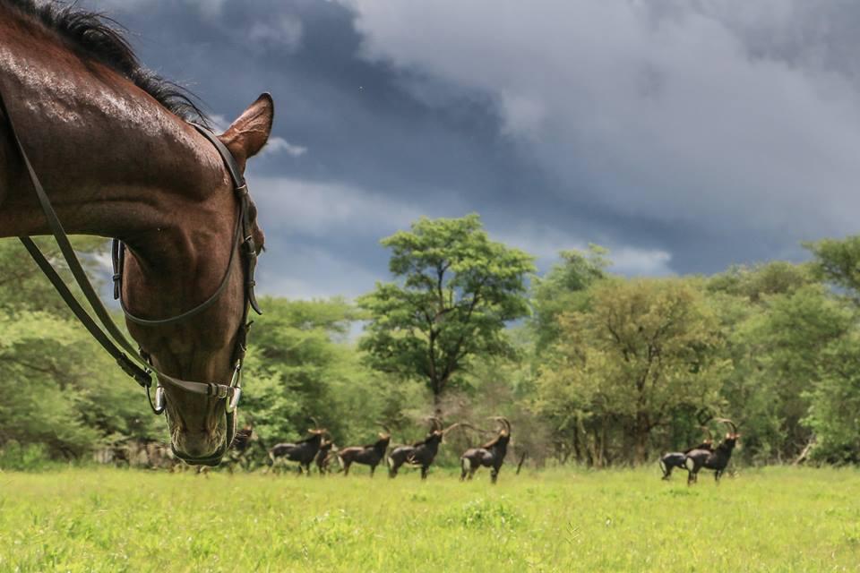 CWE Horse safari