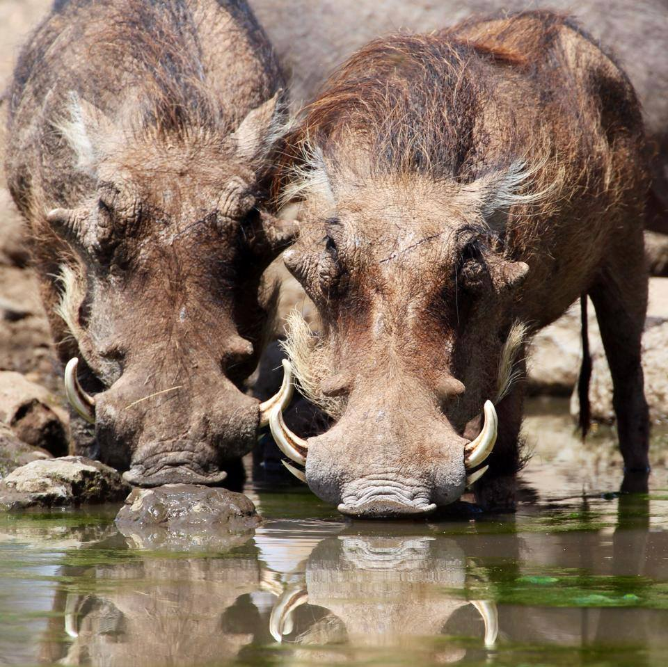About Cawston Wildlife Estate