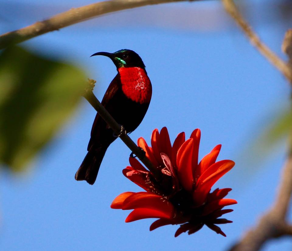 Cawston Wildlife Estate sunbird