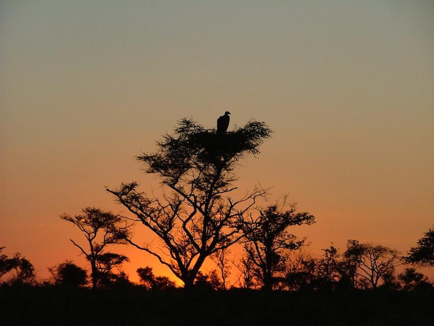 CWE sunset vutlture