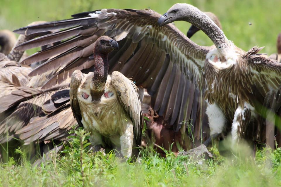 CWE vulture