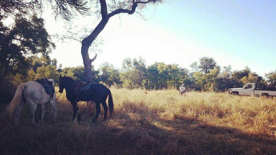 Anti-poaching measures on Cawston Wildlife Estate