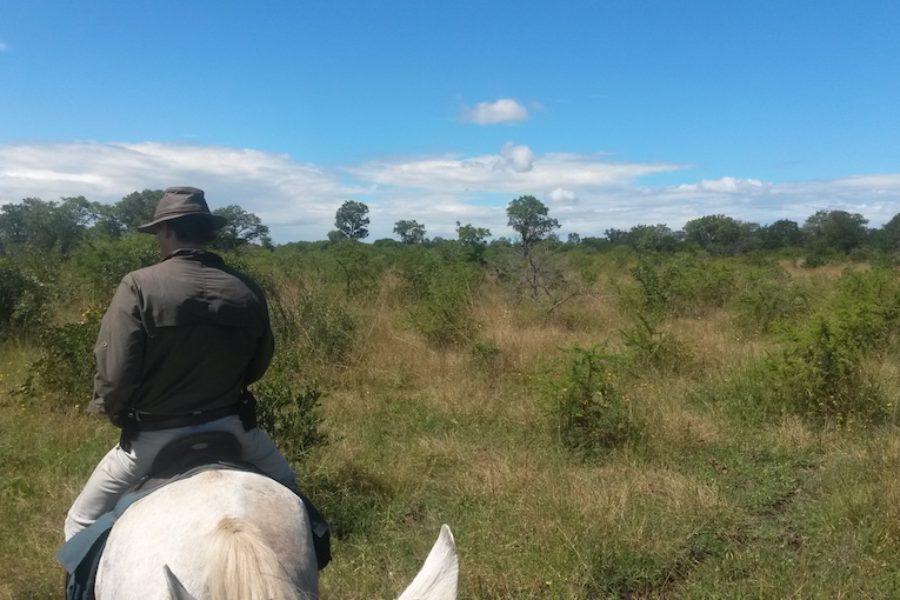 Horse Safaris on CWE